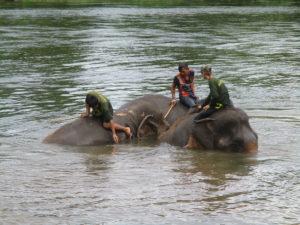 éléphants en Thaïlande