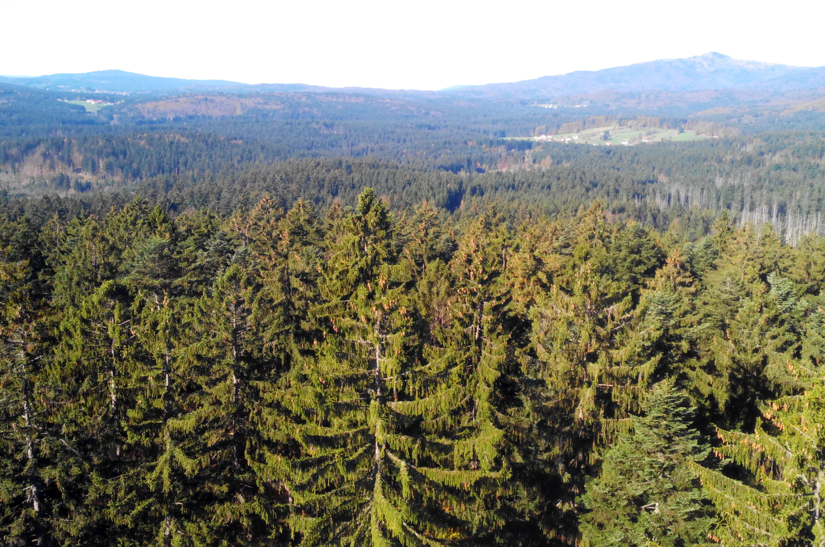 Baumwipfelpfad forêt bavaroise allemagne