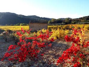 randonnée de Nyons à Venterol, provence, vignes en automne, vignoble en automne