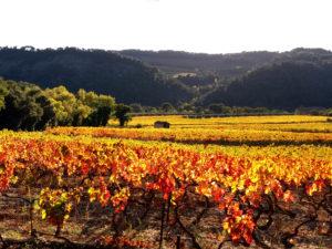 Itinéraire randonnée de Nyons à Venterol, provence vignes en automne